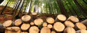 Stueckholz im Wald gestapelt. Die Stueckholzheizungen der Firma Haesler AG, machen Ihr Zuhause wohlig warm.